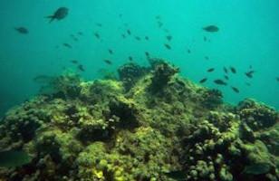 چه گیاهانی در آبهای شور میتوانند رشد کنند؟